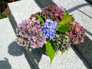 Cut flower bouquet of hydrangeas