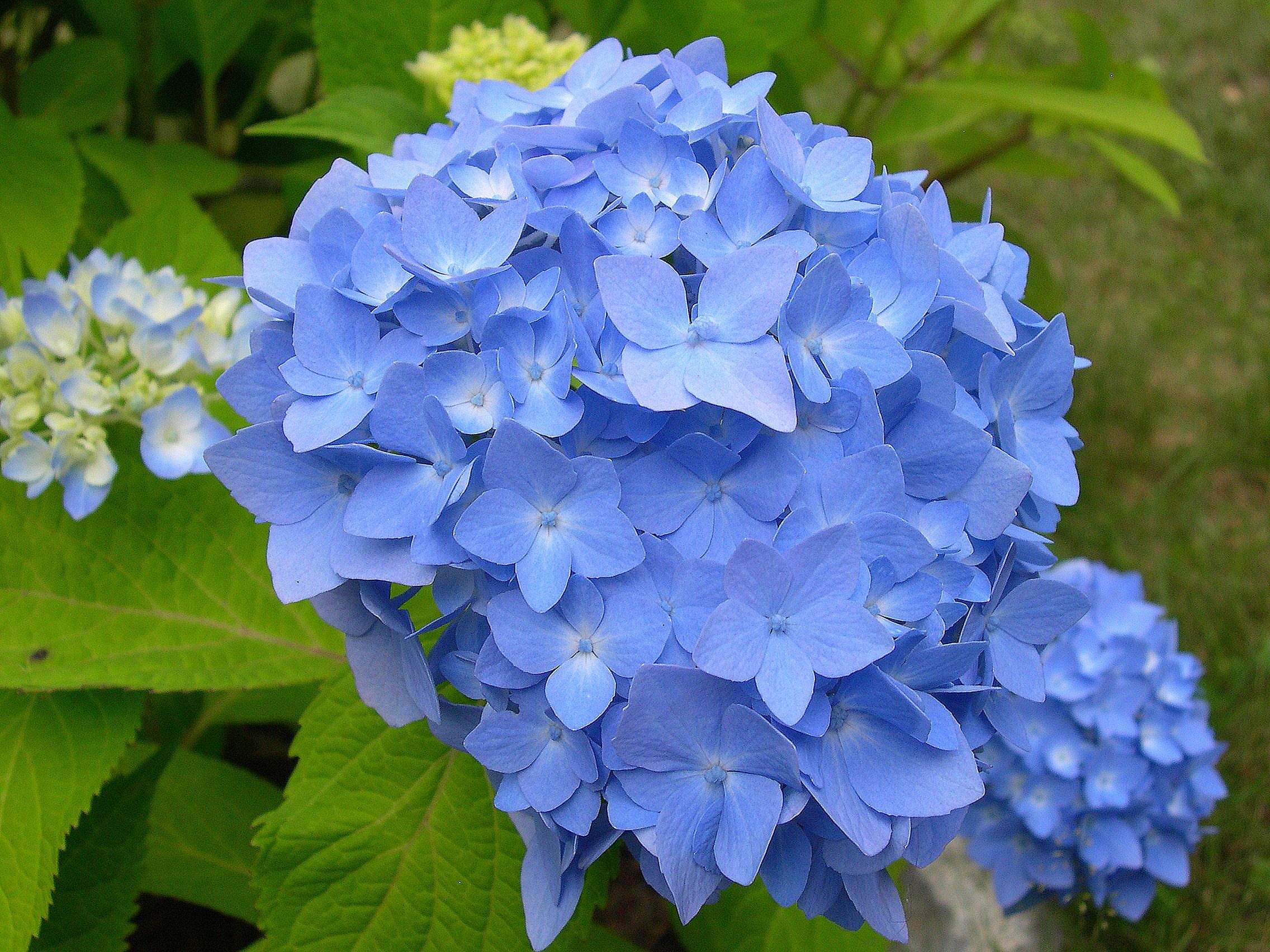 in a blue - photo #34