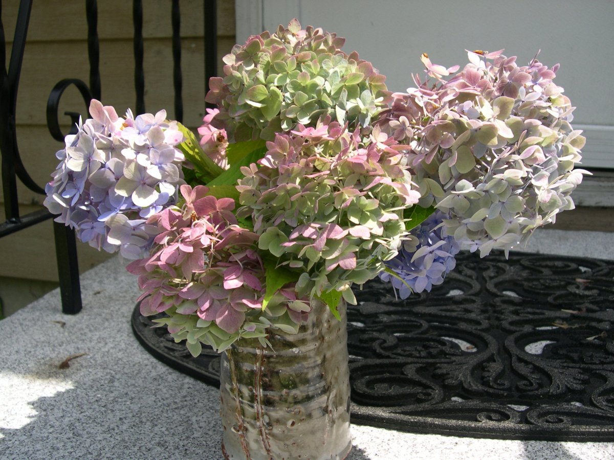 How to Preserve Hydrangeas as Cut Flowers in Vases