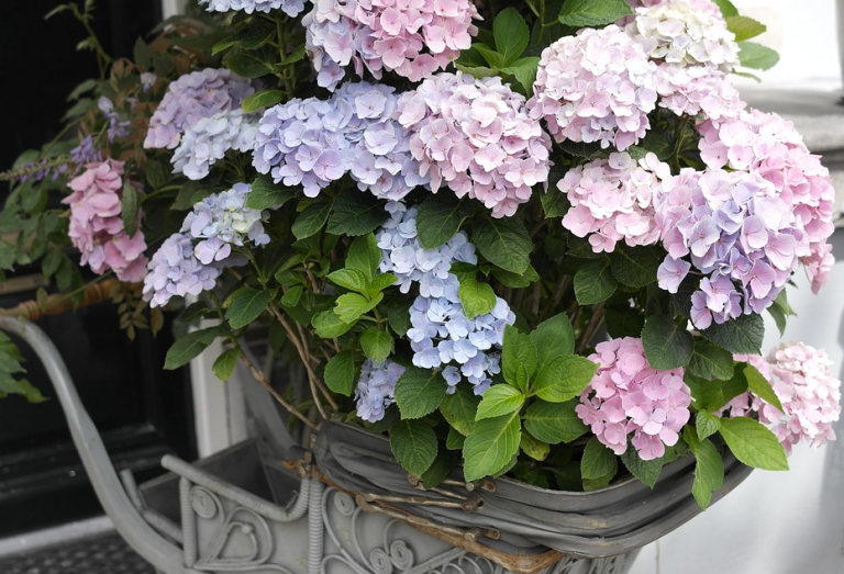 baby carriage potted hydrangea
