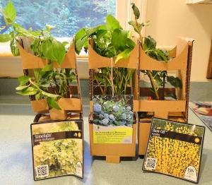 Got My New Little Mail Order Hydrangea Plants