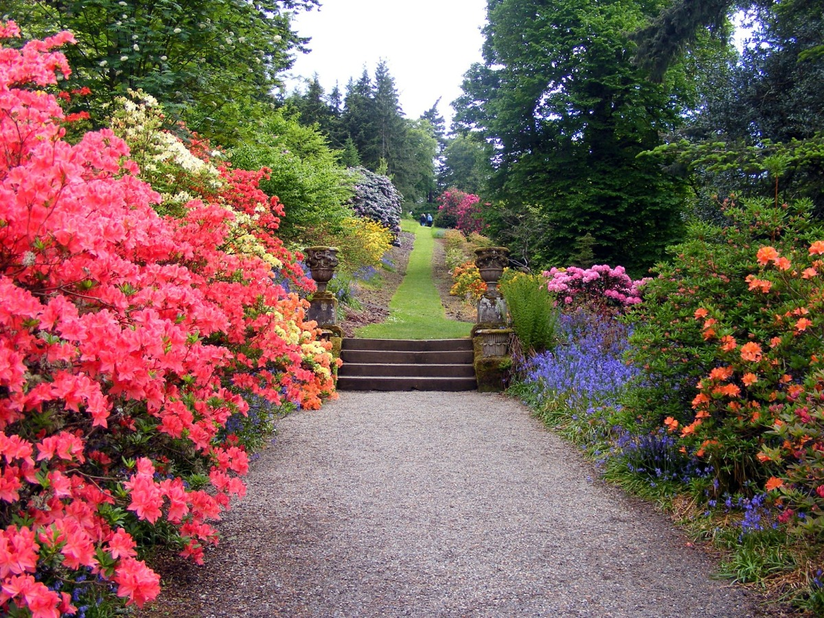 garden path flowering landscape shrubs