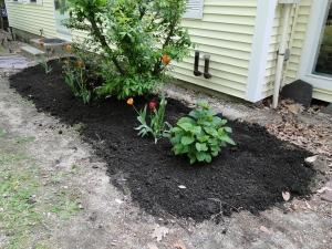 hydrangea plant in garden