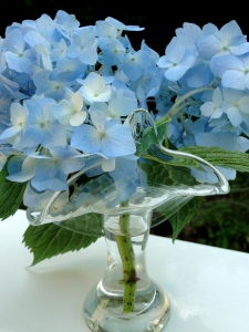 blue hydrangeas in a glass vase