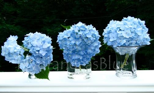 Vases Filled With Light Blue Hydrangeas Hydrangeas Blue