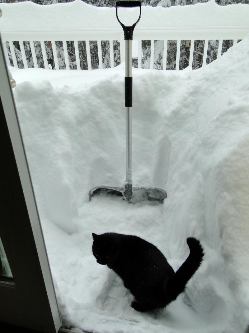 cat shovel snow