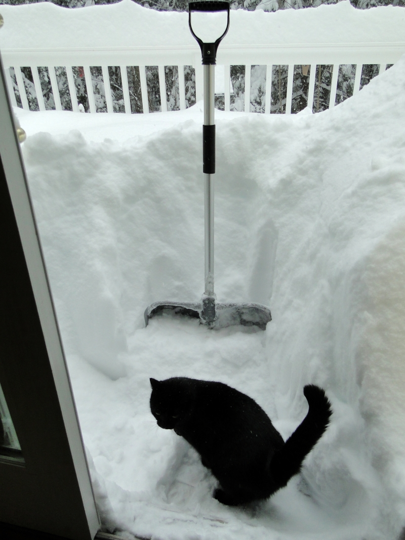 cat shovel snow