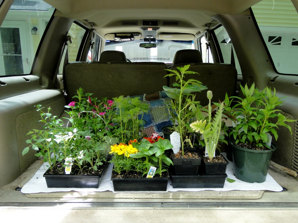 potted plants on the tailgate
