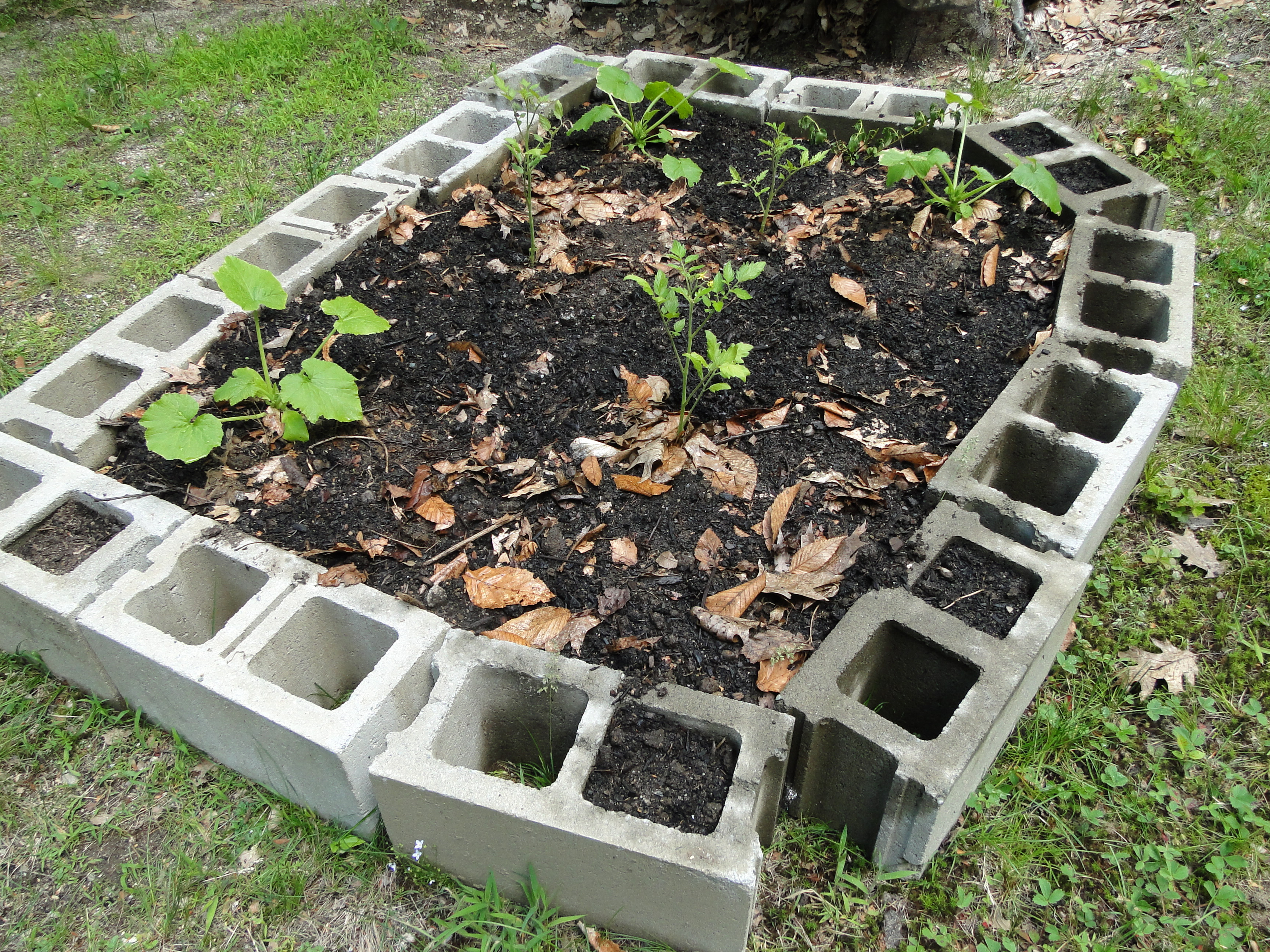 Ugly but free a raised bed garden made of cinder for Concrete raised garden bed designs