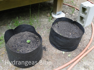 growing vegetables in fabric pots