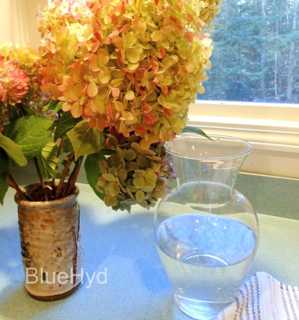 How To Preserve Hydrangeas As Cut Flowers In Vases Hydrangeas Blue