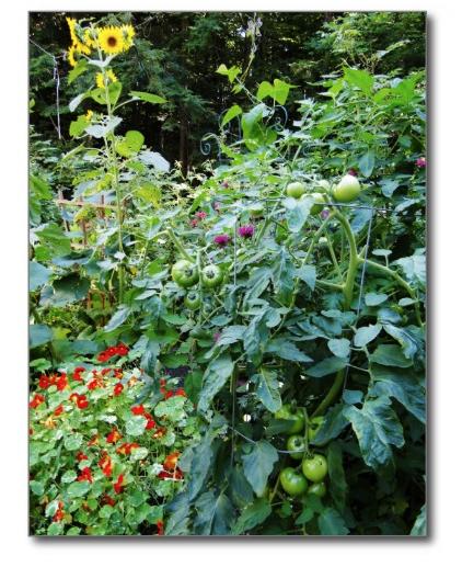 backyard garden scene