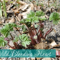 Identifying Perennials in Spring