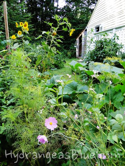 Lush Garden Foliage