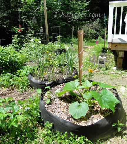 summer garden zucchini