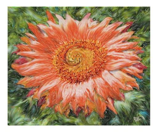 orange sunflower abstract art poster