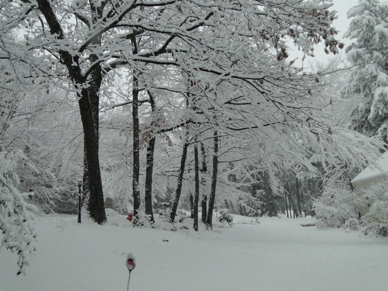 winter snowfall snowstorm