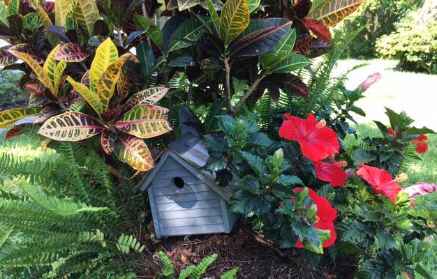 birdhouse crotons hibiscus