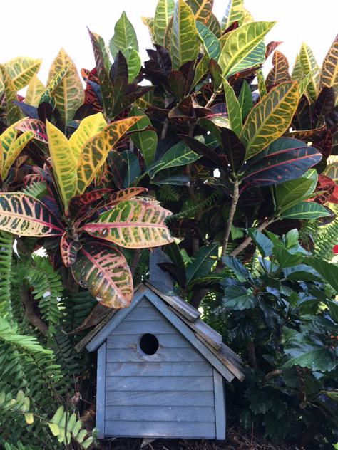 crotons and birdhouse