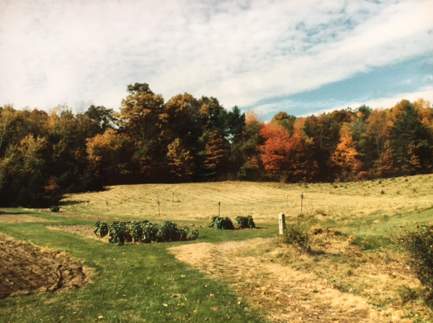 Grampa's garden