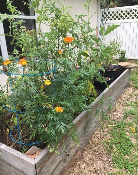 summer garden raised bed