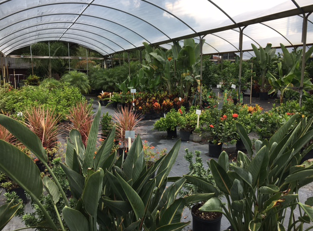 greenhouse Florida