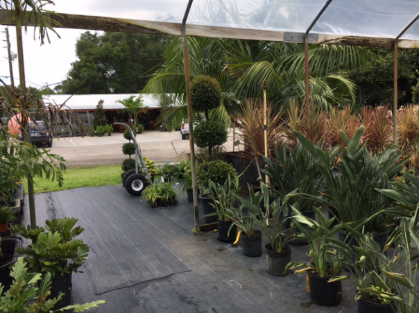 Pell's trees and tropical plants