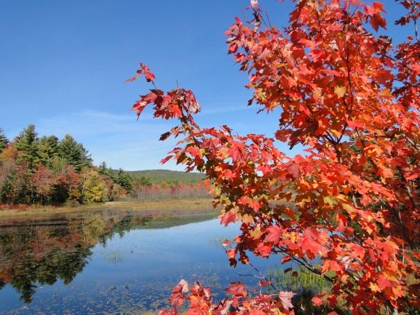 orange maple leaves at edge of lake