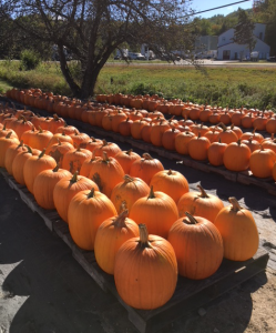 pumpkins for sale at roadside farm