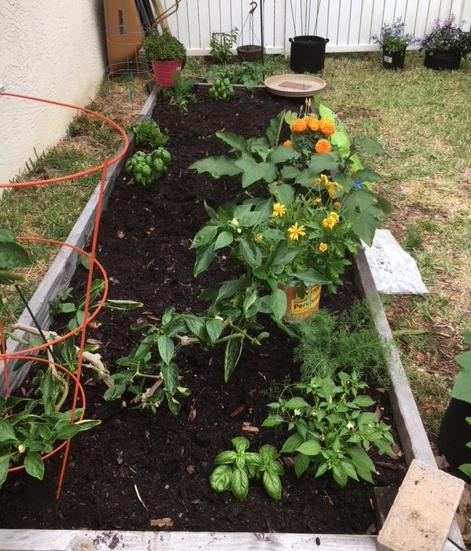 raised bed garden dirt
