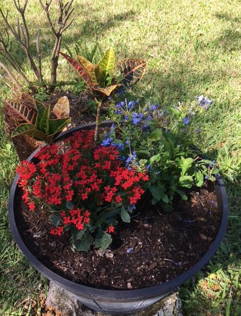 bucket of flowering plants