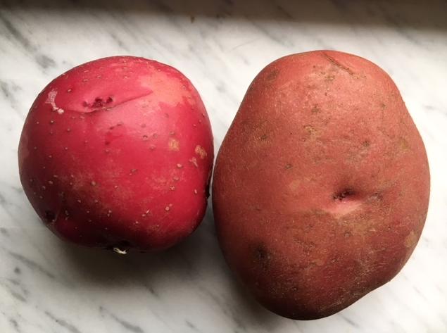 garden potato