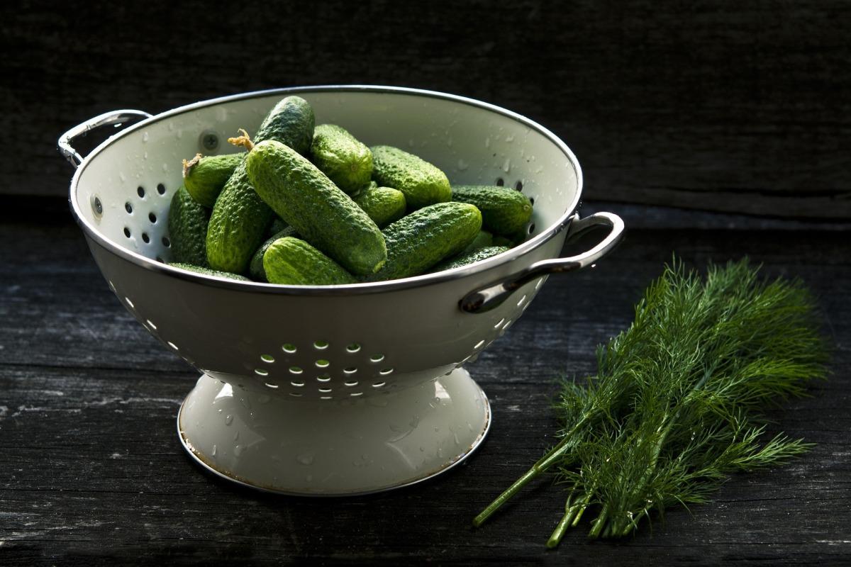 cucumber crop pickle making