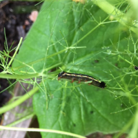 Cut Worms, Pill Bugs and Squash Vine Borers Invade My Space