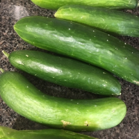 Ways to Use That Overload of Cucumbers From the Garden