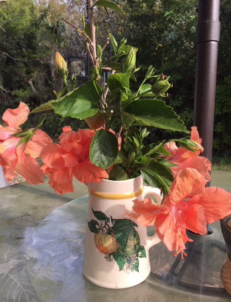 Milk jug vase with orange hibiscus flowers and cuttings