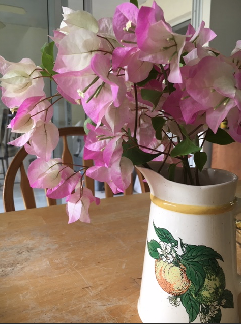 Light pink flowering bougainvillea in a vase