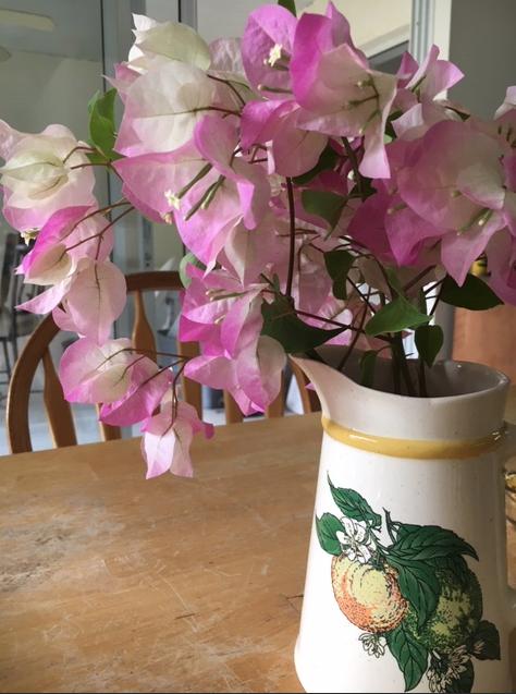 Light pink flowering bougainvillea in a vase