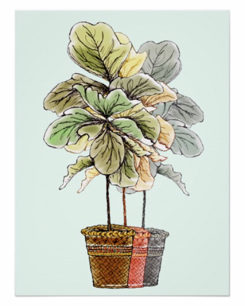 Hand drawn fiddle leaf fig in baskets on poster paper
