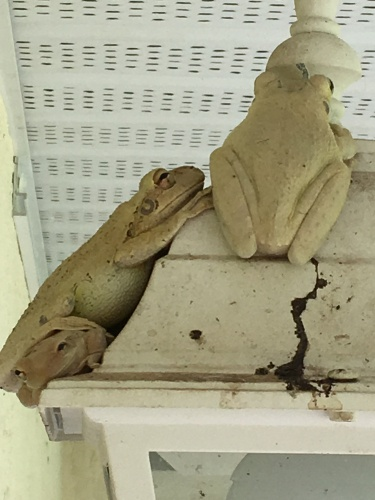 frogs sleeping the day away