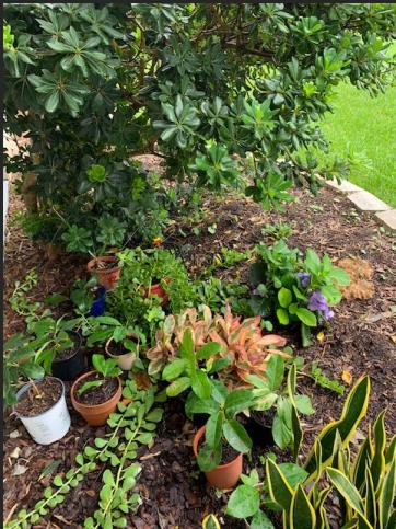 Florida garden with hydrangea