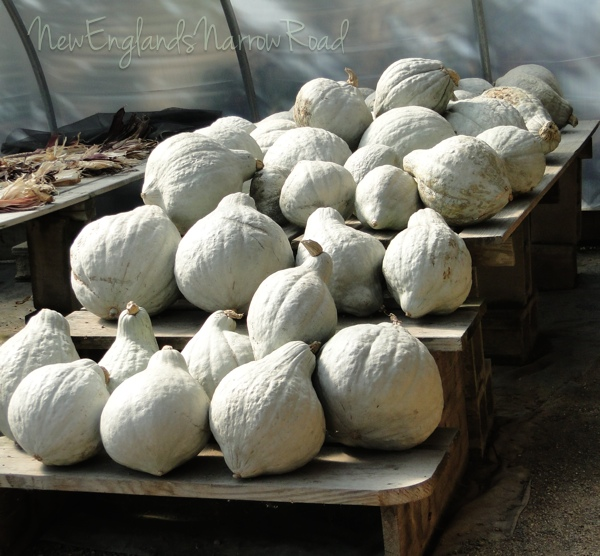 Hubbard squash for sale at Tenney Farms in Antrim, NH