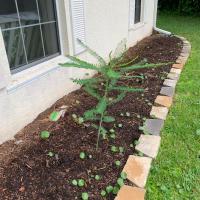 Creating a Front Garden